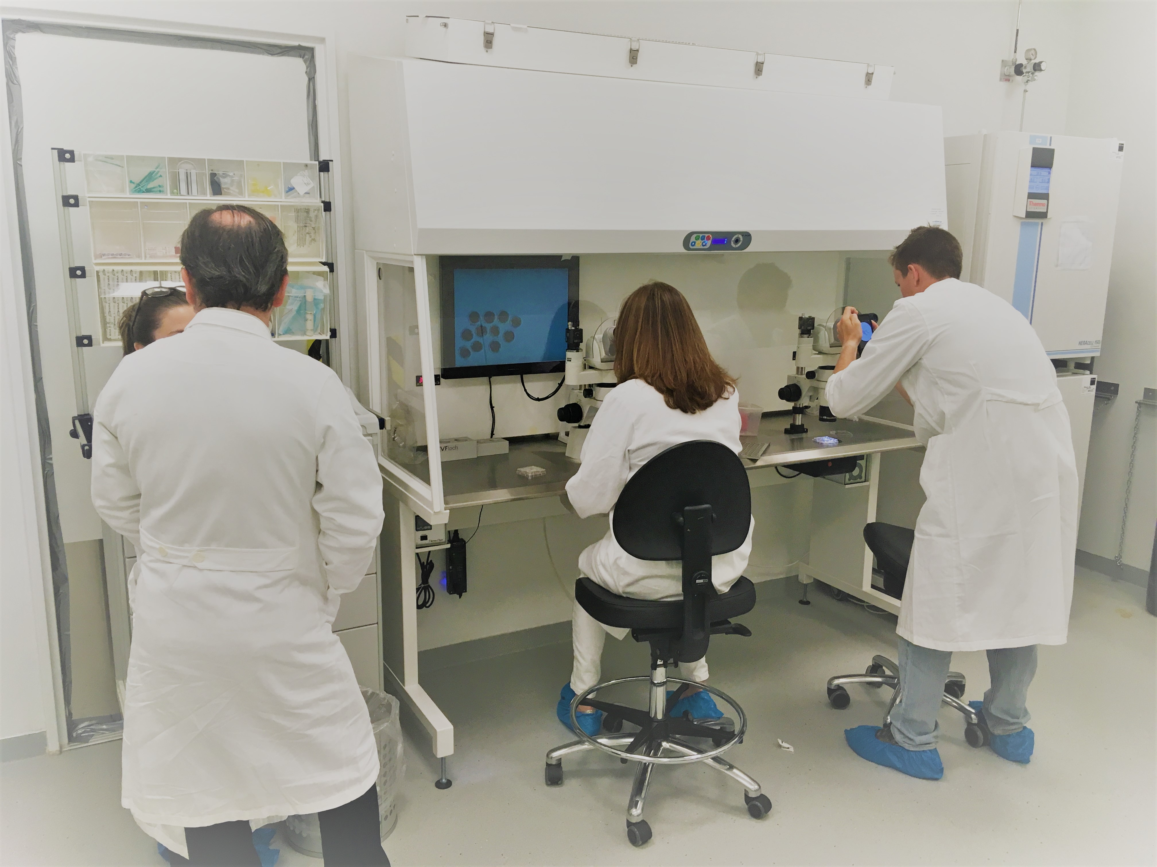 Independent labwork