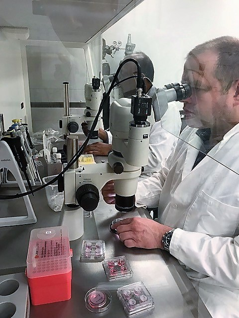 Working under the microscope